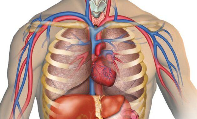 Anatomi, Fakta Dan Sistem Tubuh Manusia Lengkap Dengan Fungsinya