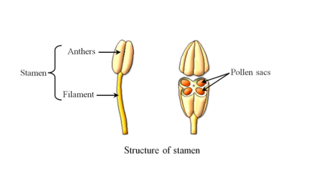 Bagian Bunga : (Komponen) Dan Struktural - sChoology.Co.id