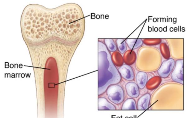 Fakta tentang trombosit