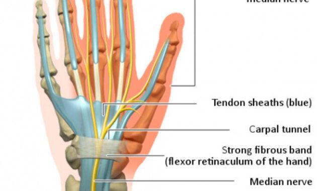 Jaringan ikat dan tendon