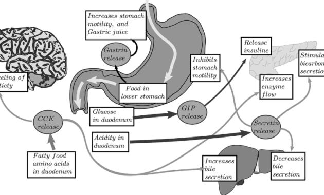 Kontrol sistem pencernaan