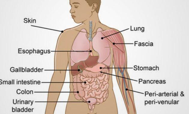 Pengertian Organ dan Sistem Organ Pada Tubuh Manusia