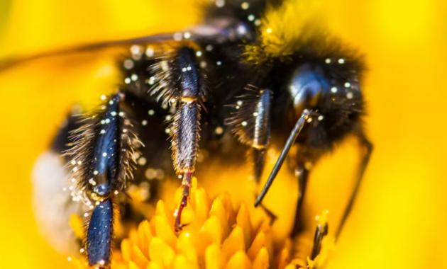 Penyerbuk Tanaman dan Tanaman (Bunga Dan Kumbang)