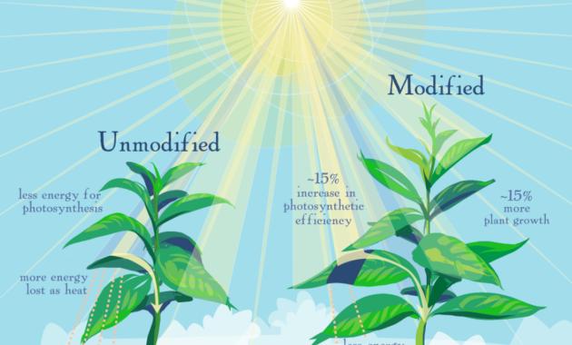 Proses Fotosintesis - Pengertian, Jenis, Reaksi Serta Alatnya