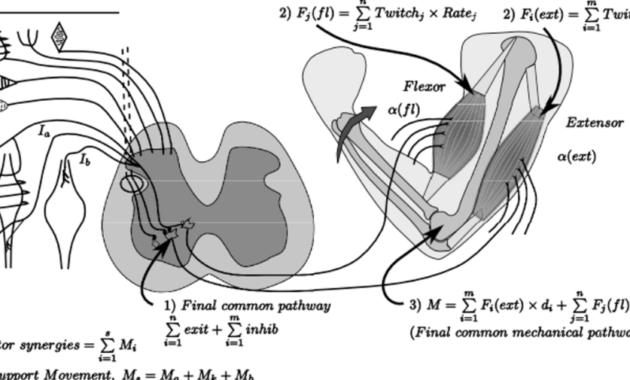Sistem neuromuskuloskeletal