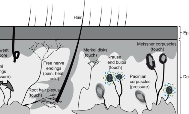 Sistem somatosensori