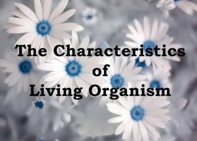 9 Karakteristik Dan Ciri ciri Organisme Hidup - sChoology ...
