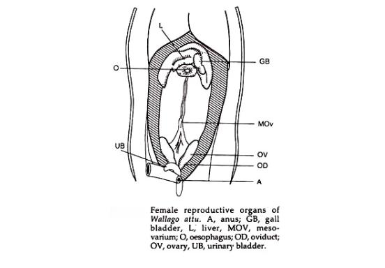 Reproduksi Ikan1