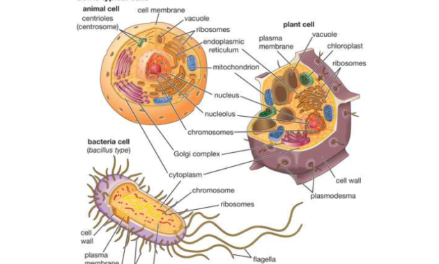 jaringan dalam ilmu biologi