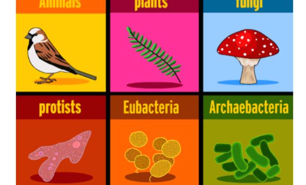Enam Kingdom (Biologi)