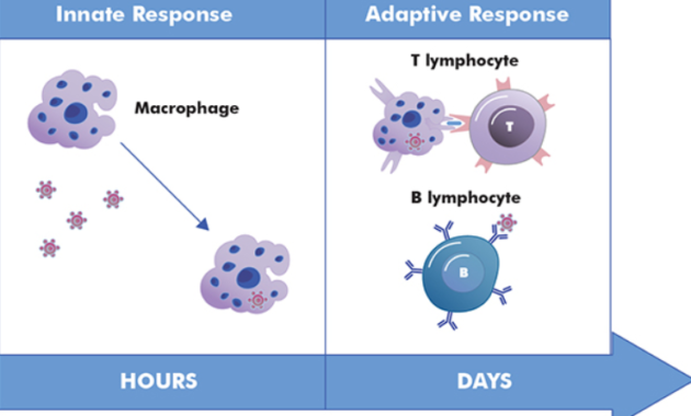 Sistem Imun Adaptif