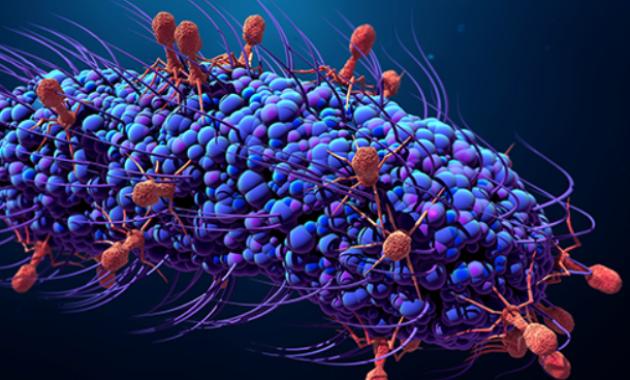 Virus Vs Bakteri